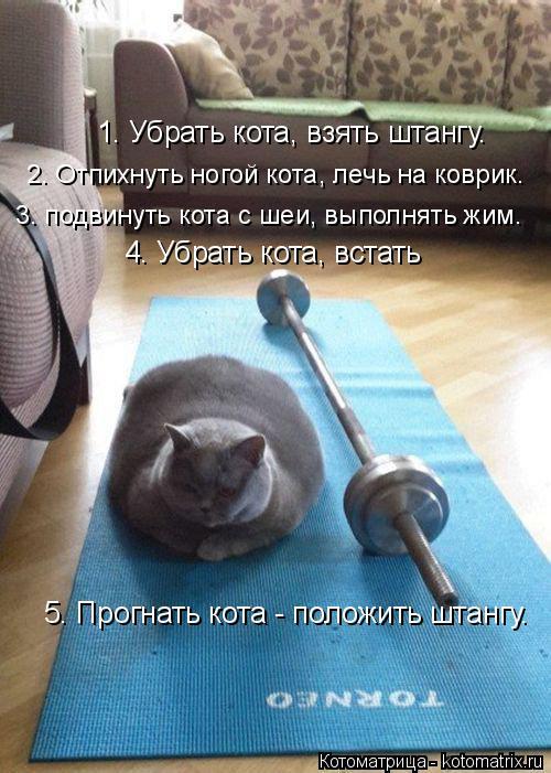 http://kotomatrix.ru/images/lolz/2015/02/05/kotomatritsa_y.jpg