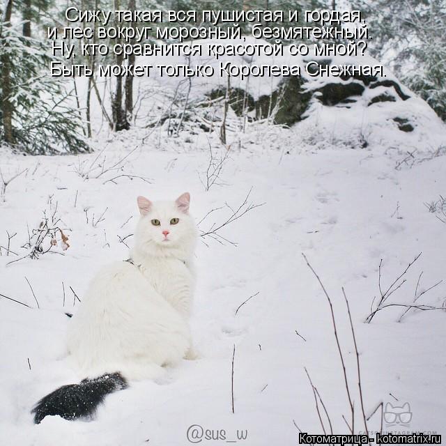 Котоматрица: Сижу такая вся пушистая и гордая, Быть может только Королева Снежная. и лес вокруг морозный, безмятежный. Ну, кто сравнится красотой со мной?