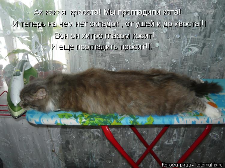 Котоматрица: И теперь на нем нет складок , от ушей и до хвоста!!! Ах какая  красота! Мы прогладили кота! Вон он хитро глазом косит! И еще прогладить просит!!!