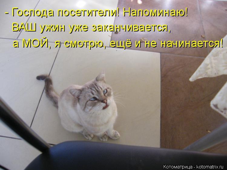 Котоматрица: - Господа посетители! Напоминаю! ВАШ ужин уже заканчивается, а МОЙ, я смотрю, ещё и не начинается!