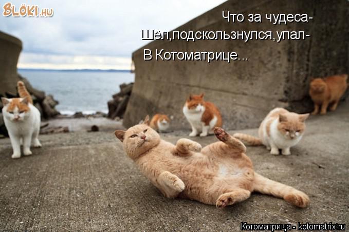 Котоматрица: Что за чудеса- Шёл,подскользнулся,упал- В Котоматрице...