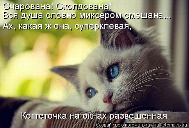 http://kotomatrix.ru/images/lolz/2015/02/06/kotomatritsa_wQ.jpg