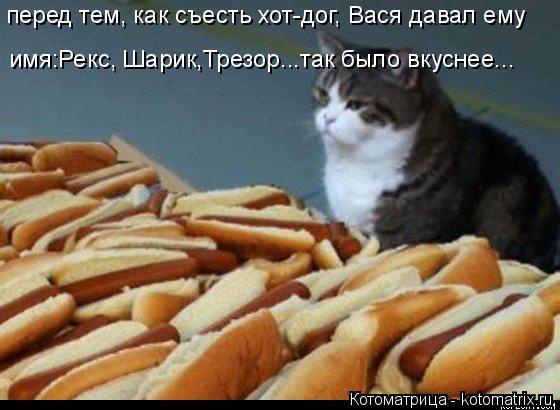 Котоматрица: имя:Рекс, Шарик,Трезор...так было вкуснее... перед тем, как съесть хот-дог, Вася давал ему