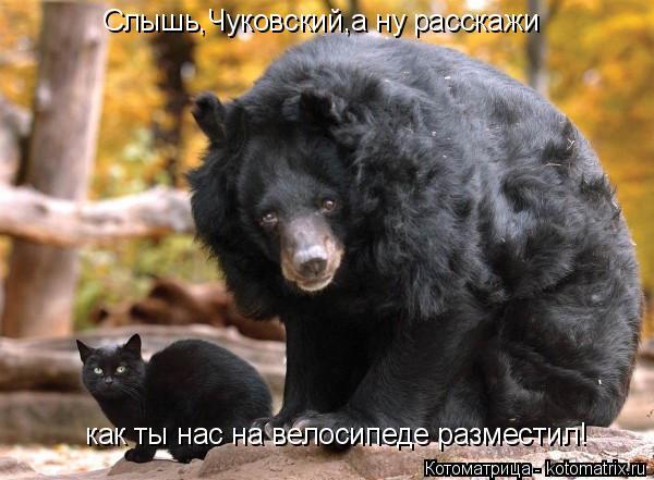 Котоматрица: Слышь,Чуковский,а ну расскажи как ты нас на велосипеде разместил!