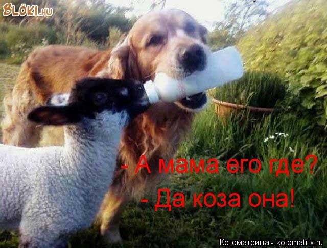 Котоматрица: - Да коза она! - А мама его где?