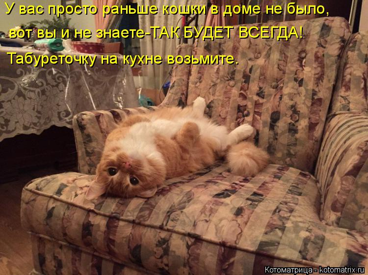 Котоматрица: У вас просто раньше кошки в доме не было, вот вы и не знаете-ТАК БУДЕТ ВСЕГДА! Табуреточку на кухне возьмите.