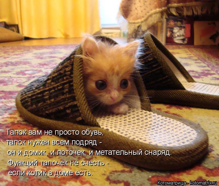 Котоматрица: Тапок вам не просто обувь,  тапок нужен всем подряд - он и домик, и лоточек, и метательный снаряд. Функций тапочек не счесть - если котик в доме