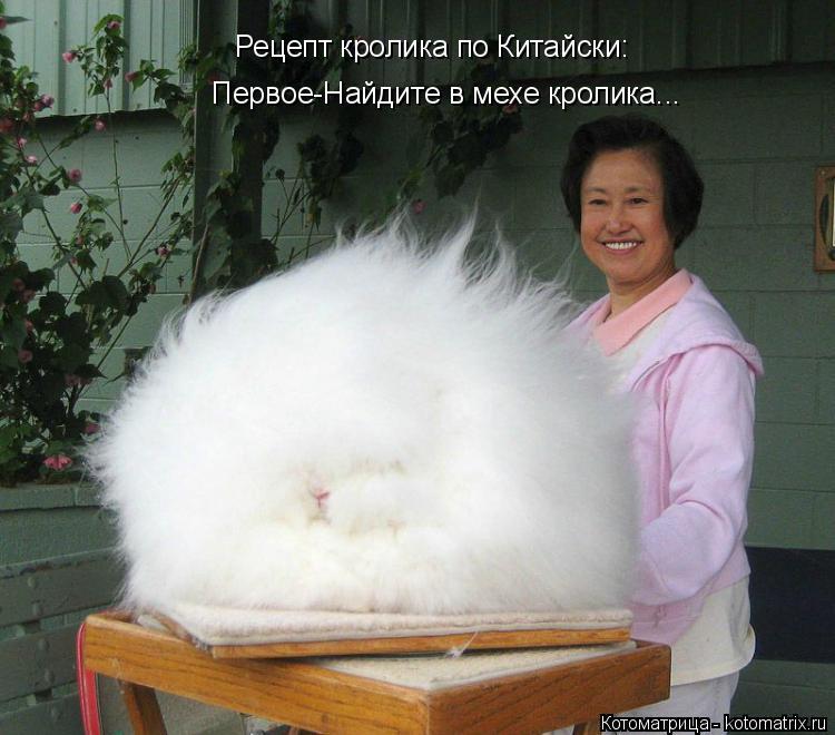 Котоматрица: Рецепт кролика по Китайски: Первое-Найдите в мехе кролика...
