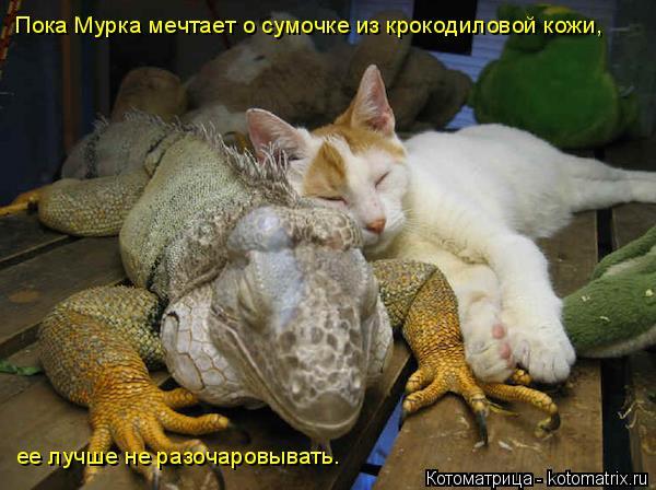Котоматрица: Пока Мурка мечтает о сумочке из крокодиловой кожи,  ее лучше не разочаровывать.