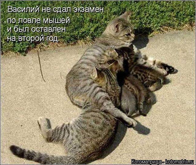 Котоматрица: по ловле мышей и был оставлен на второй год. Василий не сдал экзамен