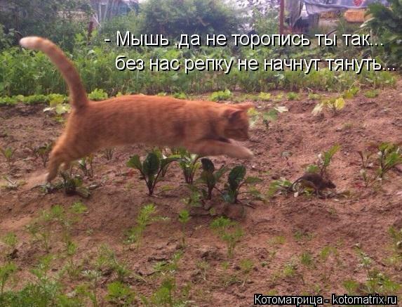 Котоматрица: - Мышь ,да не торопись ты так... без нас репку не начнут тянуть...