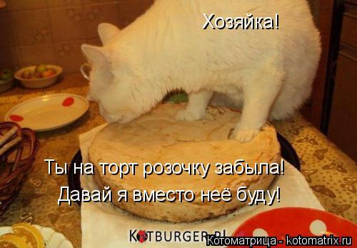 Котоматрица: Хозяйка! Ты на торт розочку забыла! Давай я вместо неё буду!