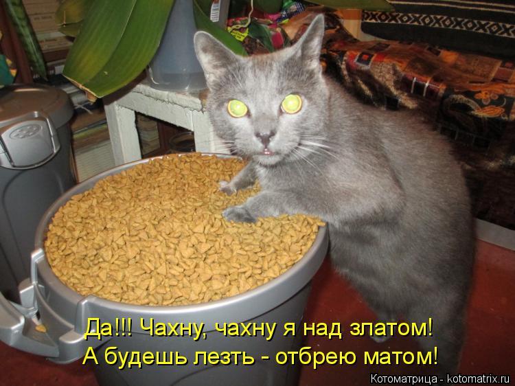 Котоматрица: Да!!! Чахну, чахну я над златом! А будешь лезть - отбрею матом!