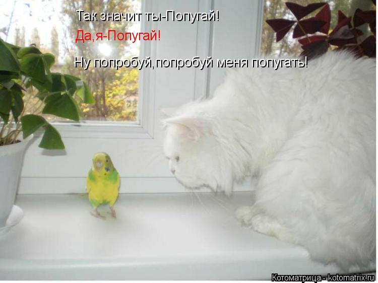 Котоматрица: Так значит ты-Попугай! Да,я-Попугай! Ну попробуй,попробуй меня попугать!