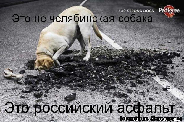 Котоматрица: Это не челябинская собака Это российский асфальт