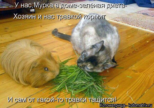 Котоматрица: У нас,Мурка,в доме-зелёная диета- Хозяин и нас травкой кормит И сам от какой-то травки тащится!