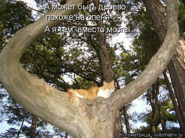 Котоматрица: А может быть дерево похоже на оленя- А я там -вместо мозга!