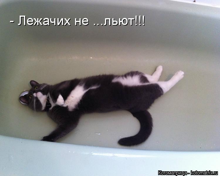 http://kotomatrix.ru/images/lolz/2015/02/09/kotomatritsa_Fe.jpg