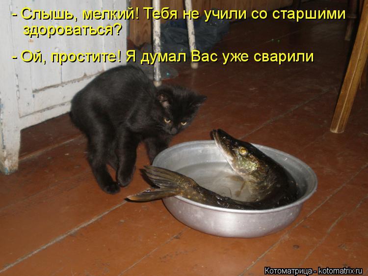 http://kotomatrix.ru/images/lolz/2015/02/09/kotomatritsa_W.jpg