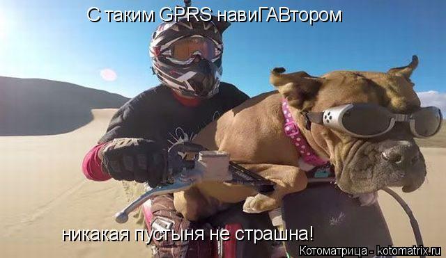 Котоматрица: С таким GPRS навиГАВтором никакая пустыня не страшна!
