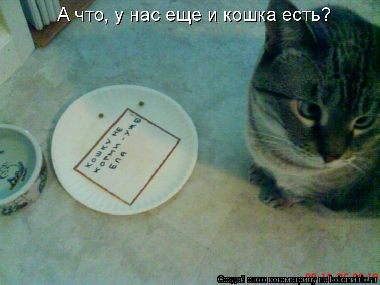 Котоматрица: А что, у нас еще и кошка есть?