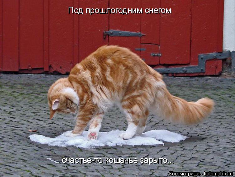 Котоматрица: Под прошлогодним снегом счастье-то кошачье зарыто...