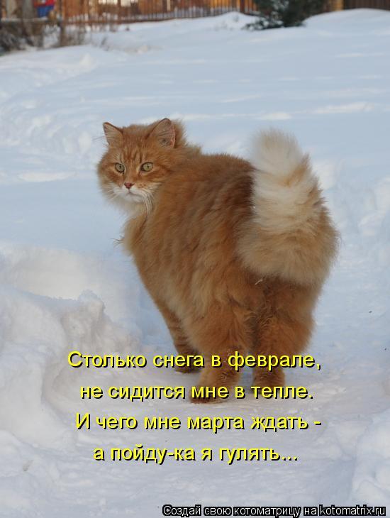http://kotomatrix.ru/images/lolz/2015/02/09/kotomatritsa_u.jpg
