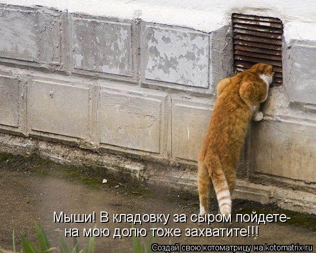 Котоматрица: Мыши! В кладовку за сыром пойдете- на мою долю тоже захватите!!!