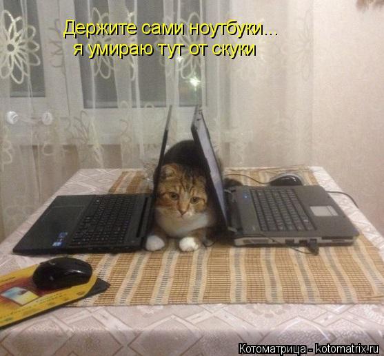 Котоматрица: Держите сами ноутбуки... я умираю тут от скуки
