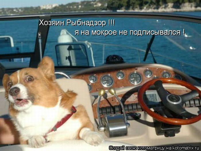 Котоматрица: Хозяин Рыбнадзор !!! я на мокрое не подписывался !