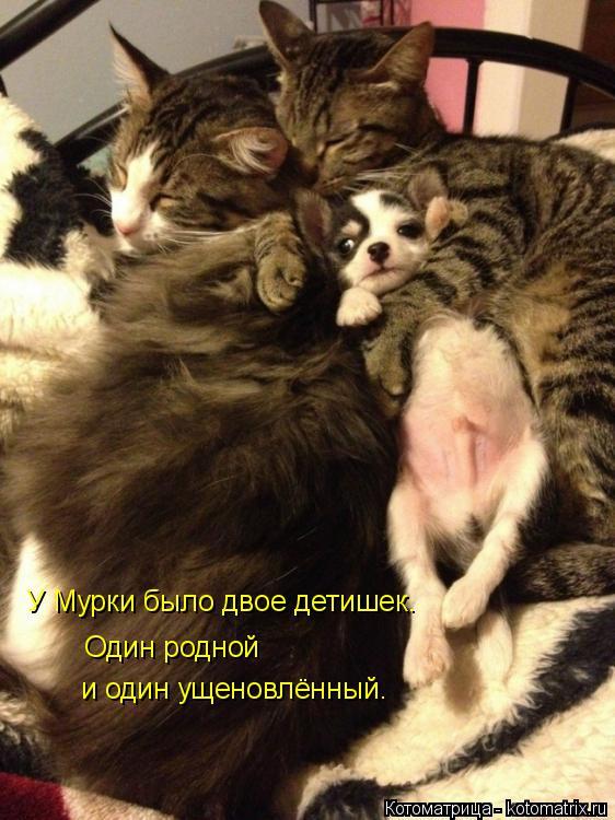 Котоматрица: У Мурки было двое детишек. Один родной  и один ущеновлённый.