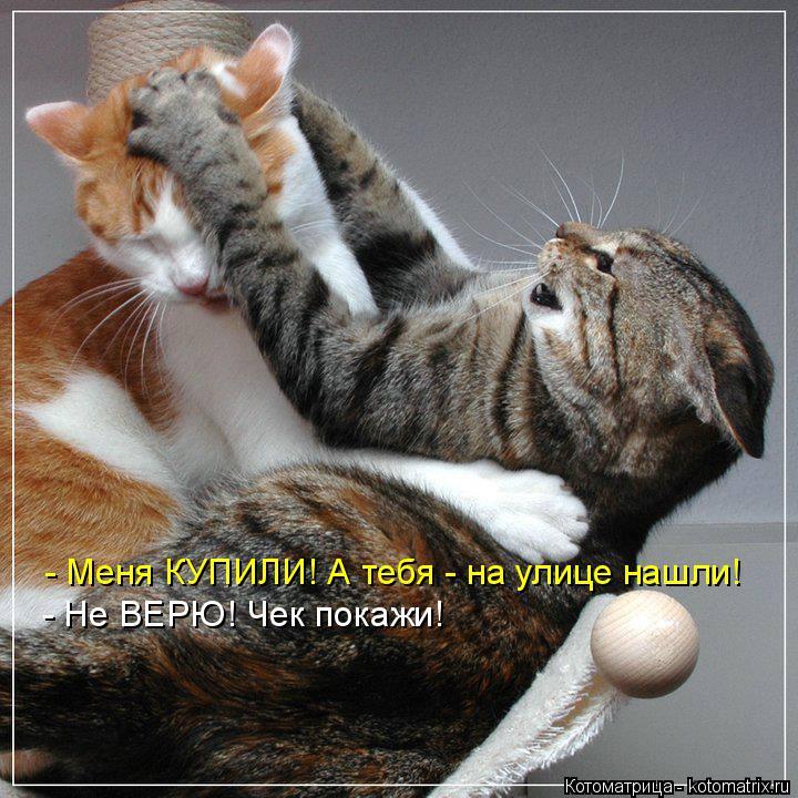 http://kotomatrix.ru/images/lolz/2015/02/10/kotomatritsa_uG.jpg