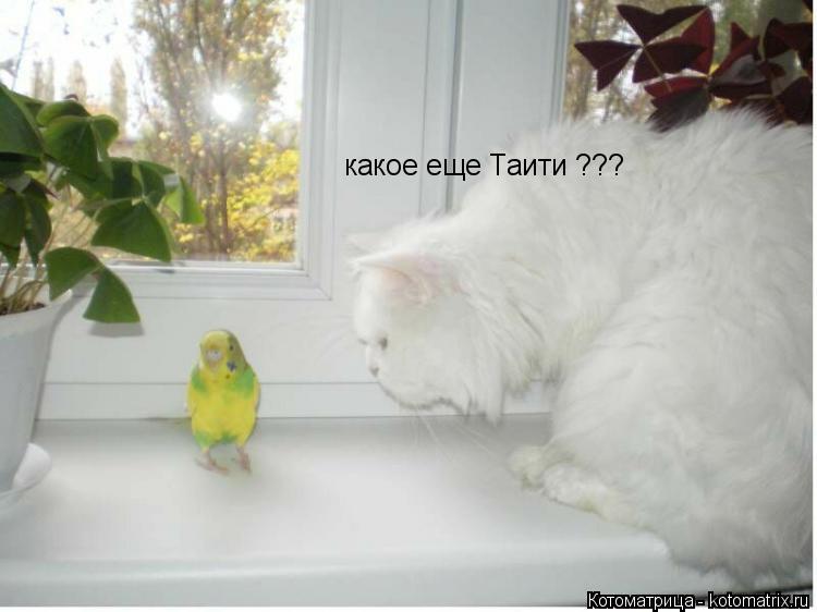 Котоматрица: какое еще Таити ???
