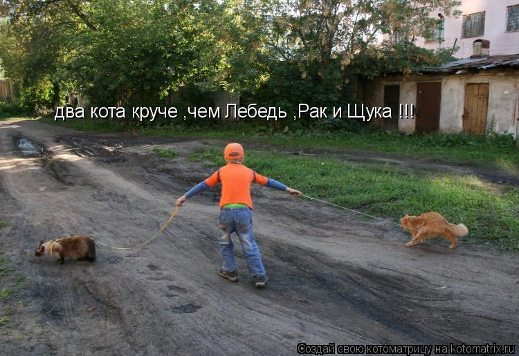 Котоматрица: два кота круче ,чем Лебедь ,Рак и Щука !!!