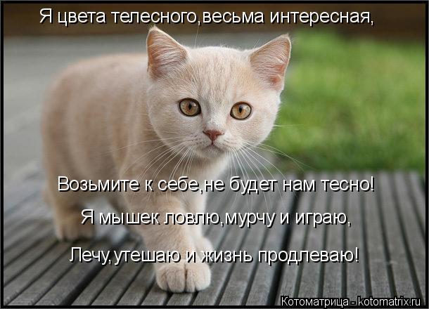 Котоматрица: Я цвета телесного,весьма интересная, Возьмите к себе,не будет нам тесно! Я мышек ловлю,мурчу и играю, Лечу,утешаю и жизнь продлеваю!