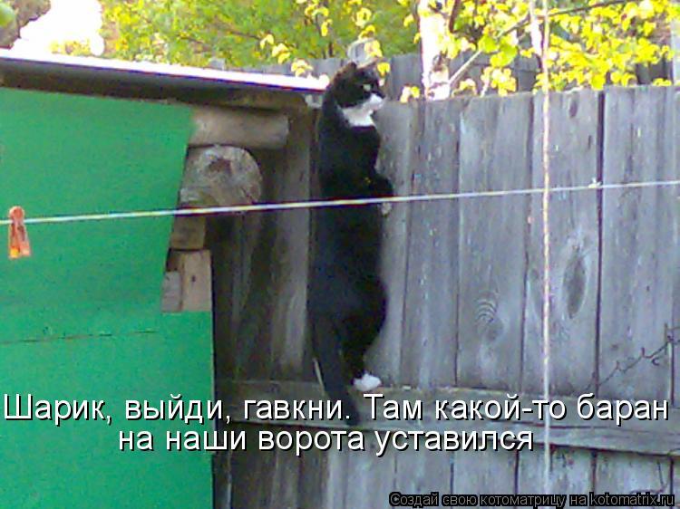 Котоматрица: Шарик, выйди, гавкни. Там какой-то баран на наши ворота уставился