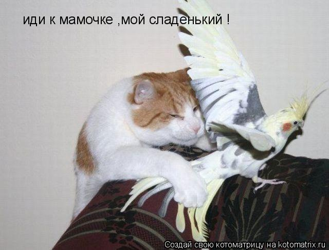 Котоматрица: иди к мамочке ,мой сладенький !
