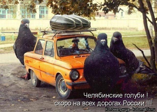 Котоматрица: Челябинские голуби ! скоро на всех дорогах России !!!