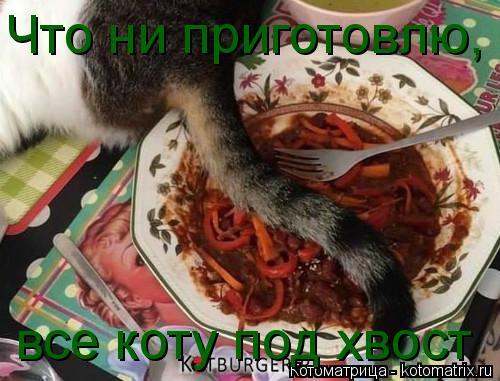 Котоматрица: Что ни приготовлю, все коту под хвост