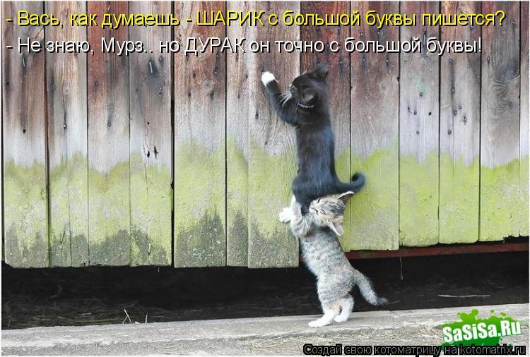 http://kotomatrix.ru/images/lolz/2015/02/12/kotomatritsa_tC.jpg