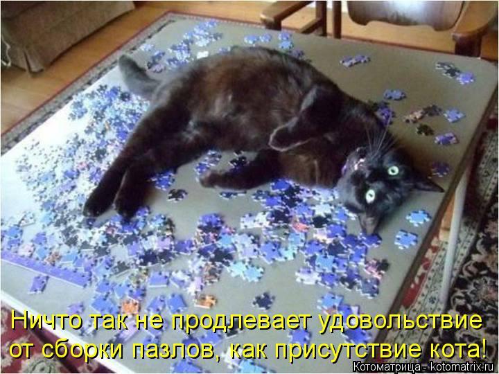 Котоматрица: Ничто так не продлевает удовольствие от сборки пазлов, как присутствие кота!
