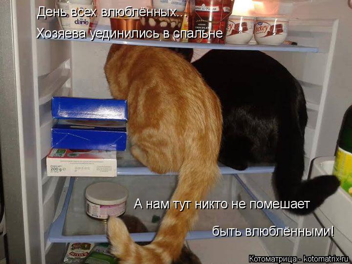 Котоматрица: День всех влюблённых... Хозяева уединились в спальне А нам тут никто не помешает  быть влюблёнными!
