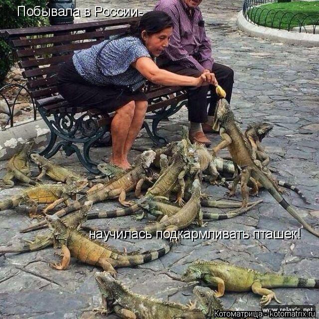 Котоматрица: Побывала в России- научилась подкармливать пташек!
