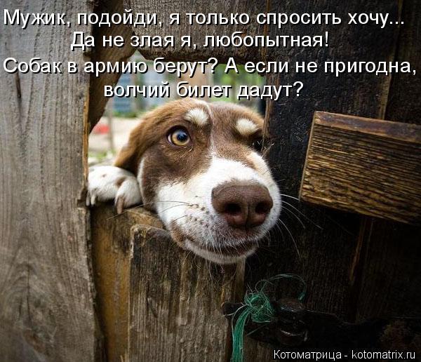 Котоматрица: Мужик, подойди, я только спросить хочу... Да не злая я, любопытная! Собак в армию берут? А если не пригодна, волчий билет дадут?