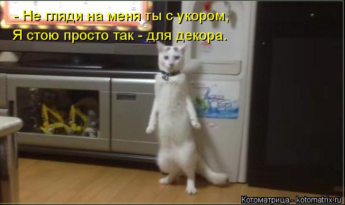 Котоматрица: - Не гляди на меня ты с укором, Я стою просто так - для декора.