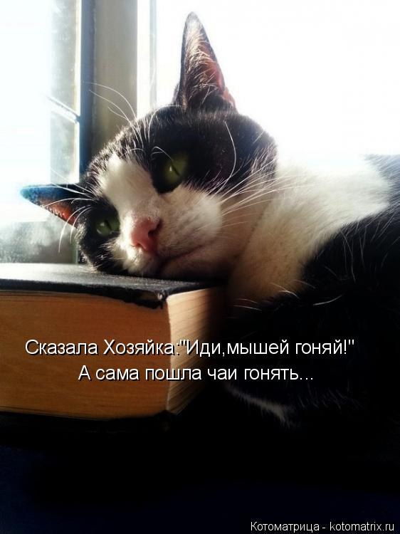 """Котоматрица: Сказала Хозяйка:""""Иди,мышей гоняй!"""" А сама пошла чаи гонять..."""