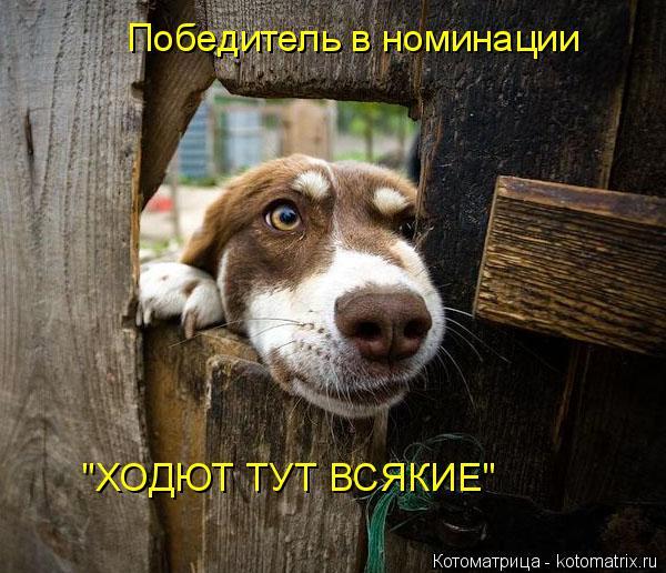 """Котоматрица: Победитель в номинации """"ХОДЮТ ТУТ ВСЯКИЕ"""""""