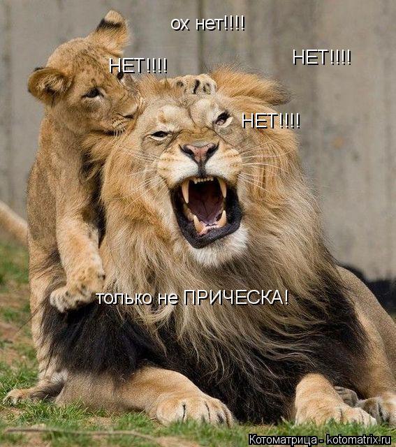 Котоматрица: ох нет!!!! НЕТ!!!! НЕТ!!!! НЕТ!!!! только не ПРИЧЕСКА!