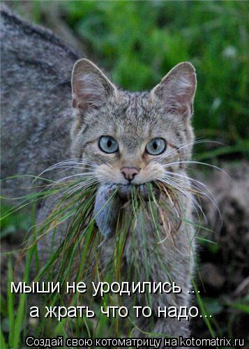 Котоматрица: мыши не уродились ... а жрать что то надо...