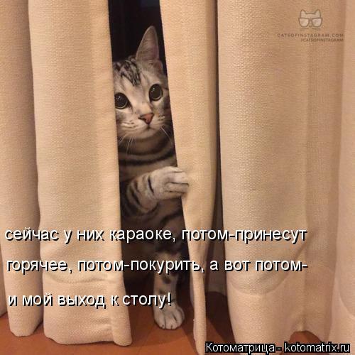 Котоматрица: сейчас у них караоке, потом-принесут горячее, потом-покурить, а вот потом- и мой выход к столу!